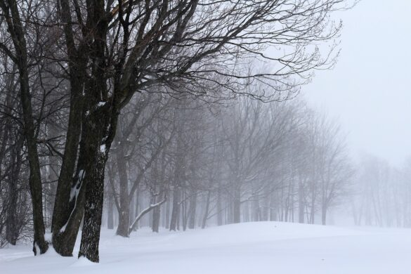 Eric Nelson winter storm